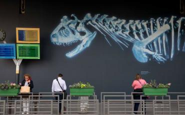 Dinosaure sur un mur